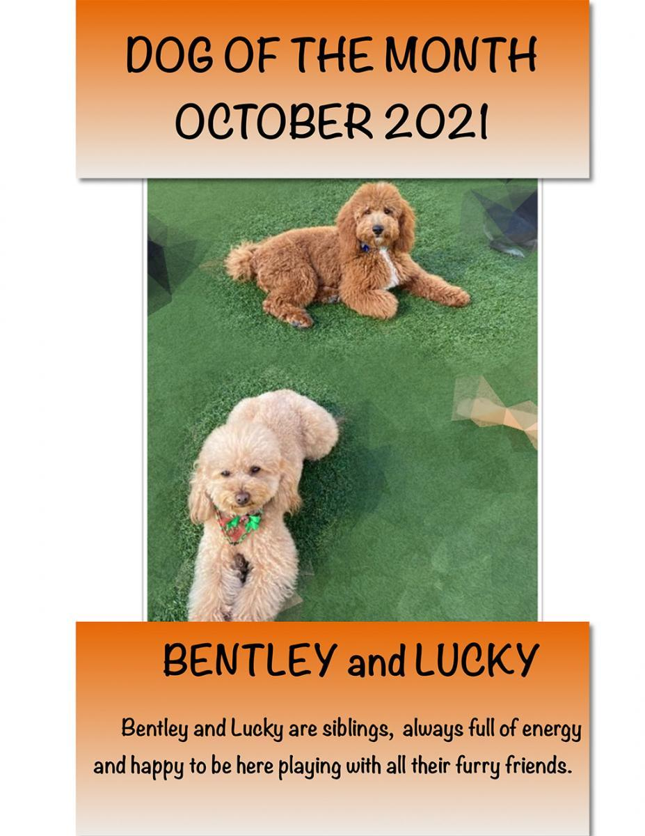 DOG OF THE MONTH OCTOBER 2021