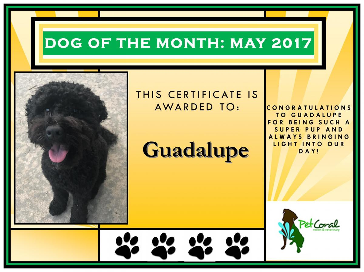 DOG OF THE MONTH-GUADALUPE (MAY 2017)