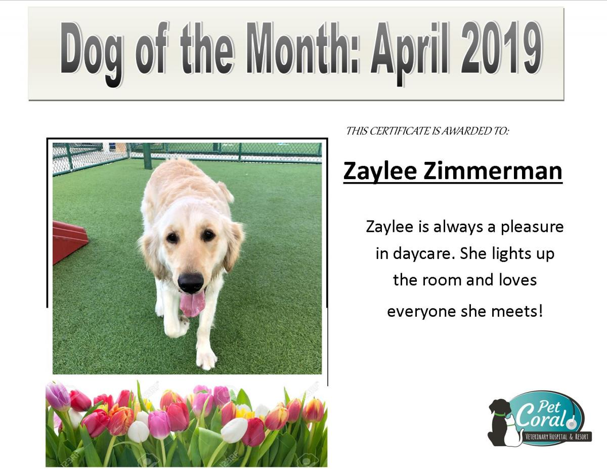 DOG OF THE MONTH- April 2019