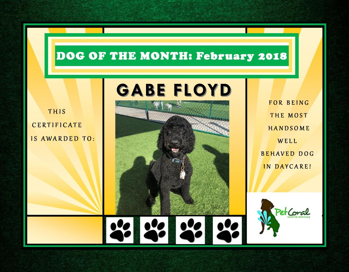 DOG OF THE MONTH- FEBRUARY 2018 (GABE FLOYD)