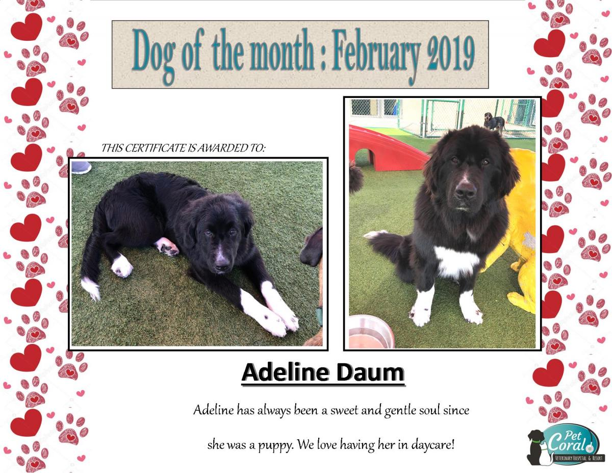 DOG OF THE MONTH- February 2019