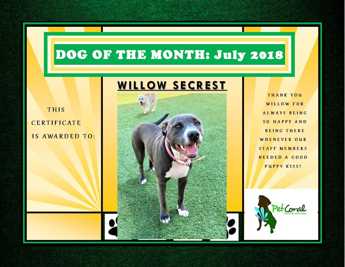 DOG OF THE MONTH- JULY 2018