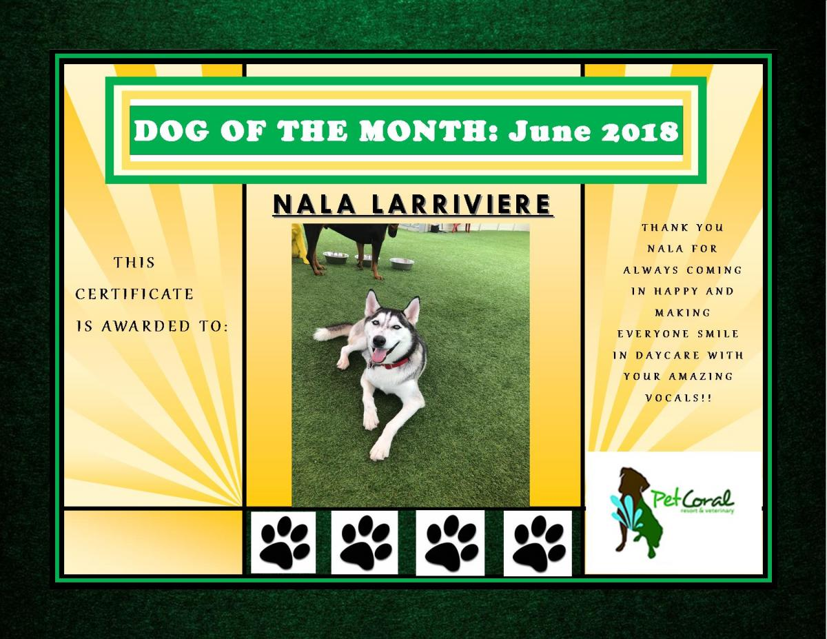 DOG OF THE MONTH- JUNE 2018