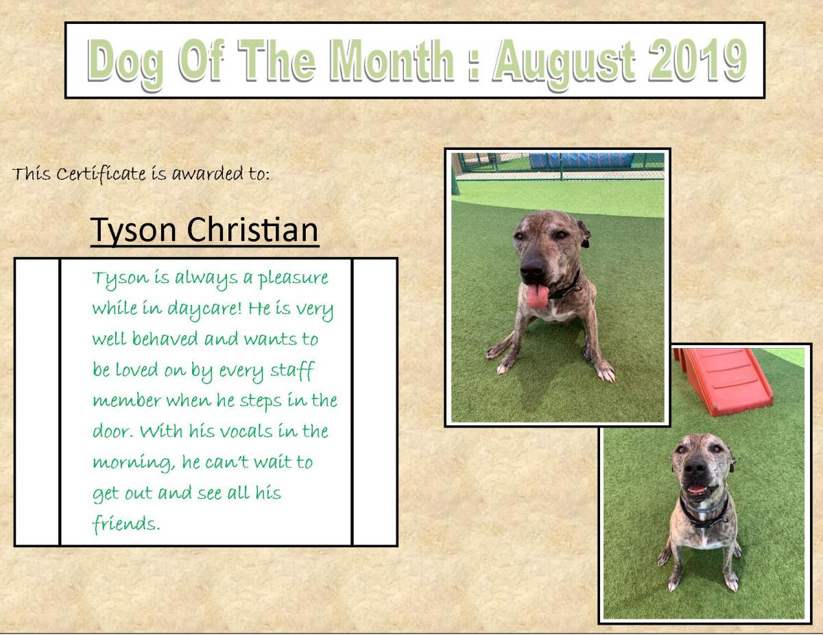 DOG OF THE MONTH AUGUST 2019