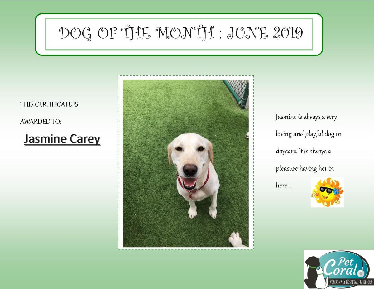 DOG OF THE MONTH JUNE 2019