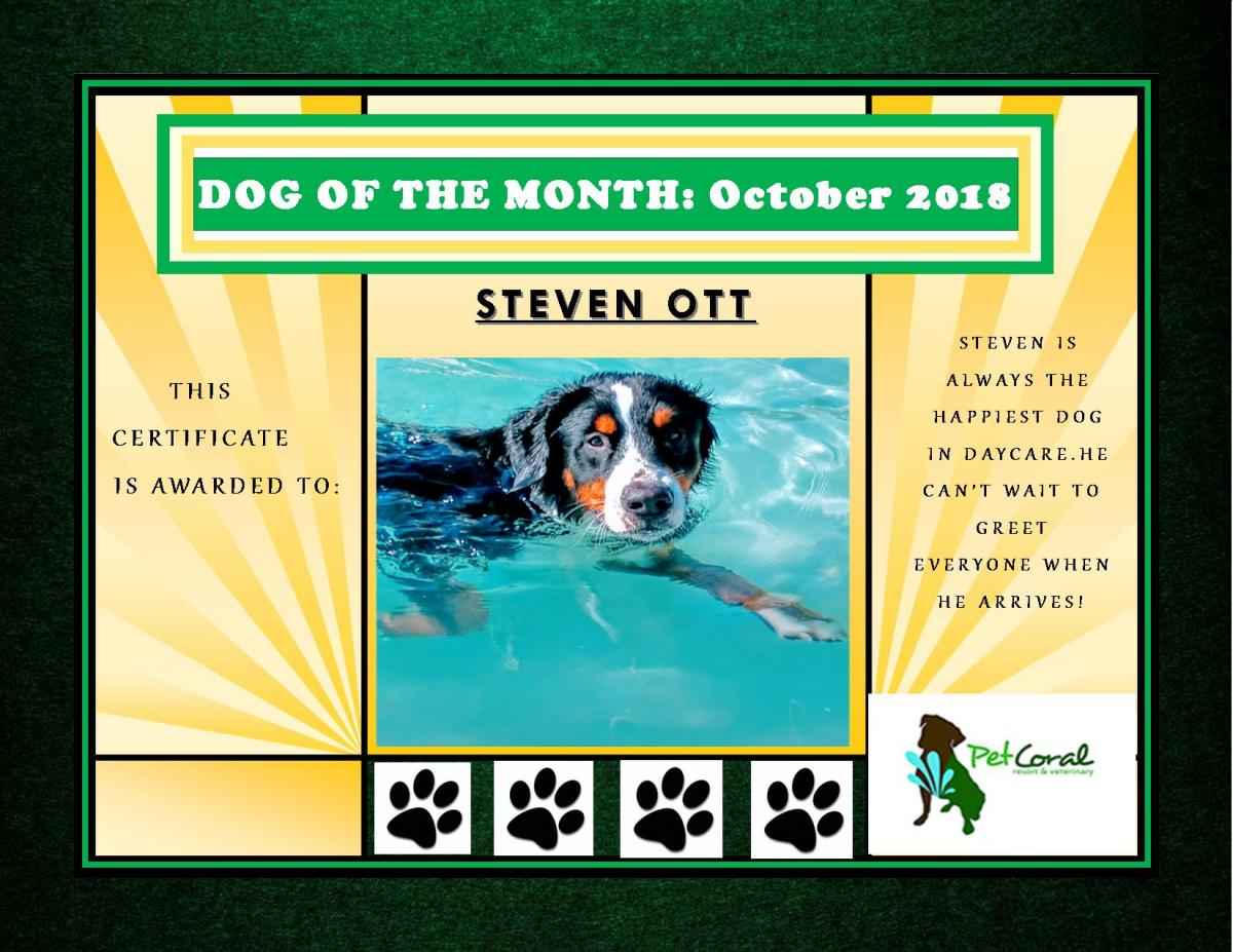 DOG OF THE MONTH - OCTOBER 2018