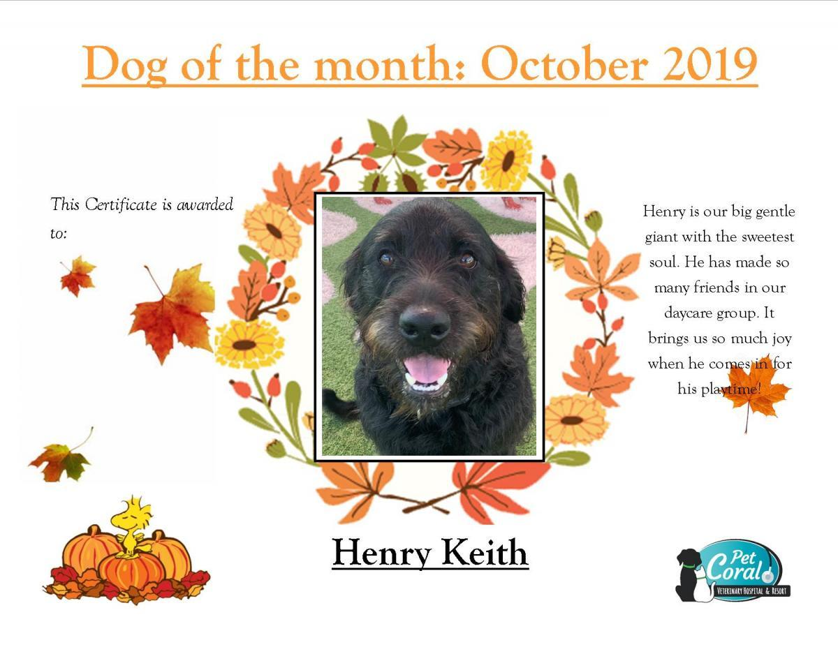 DOG OF THE MONTH  OCTOBER 2019