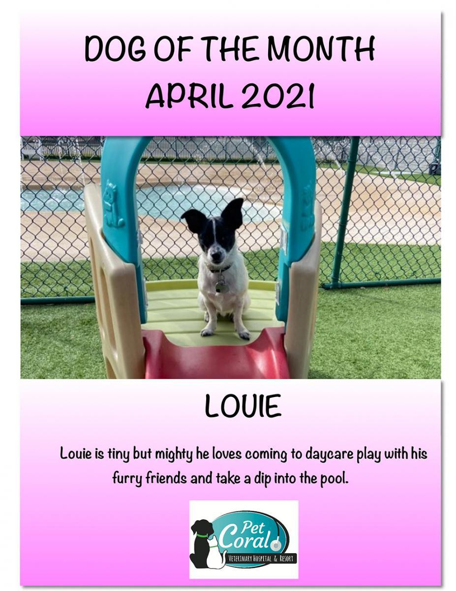 DOG OF THE MONTH APRIL 2021