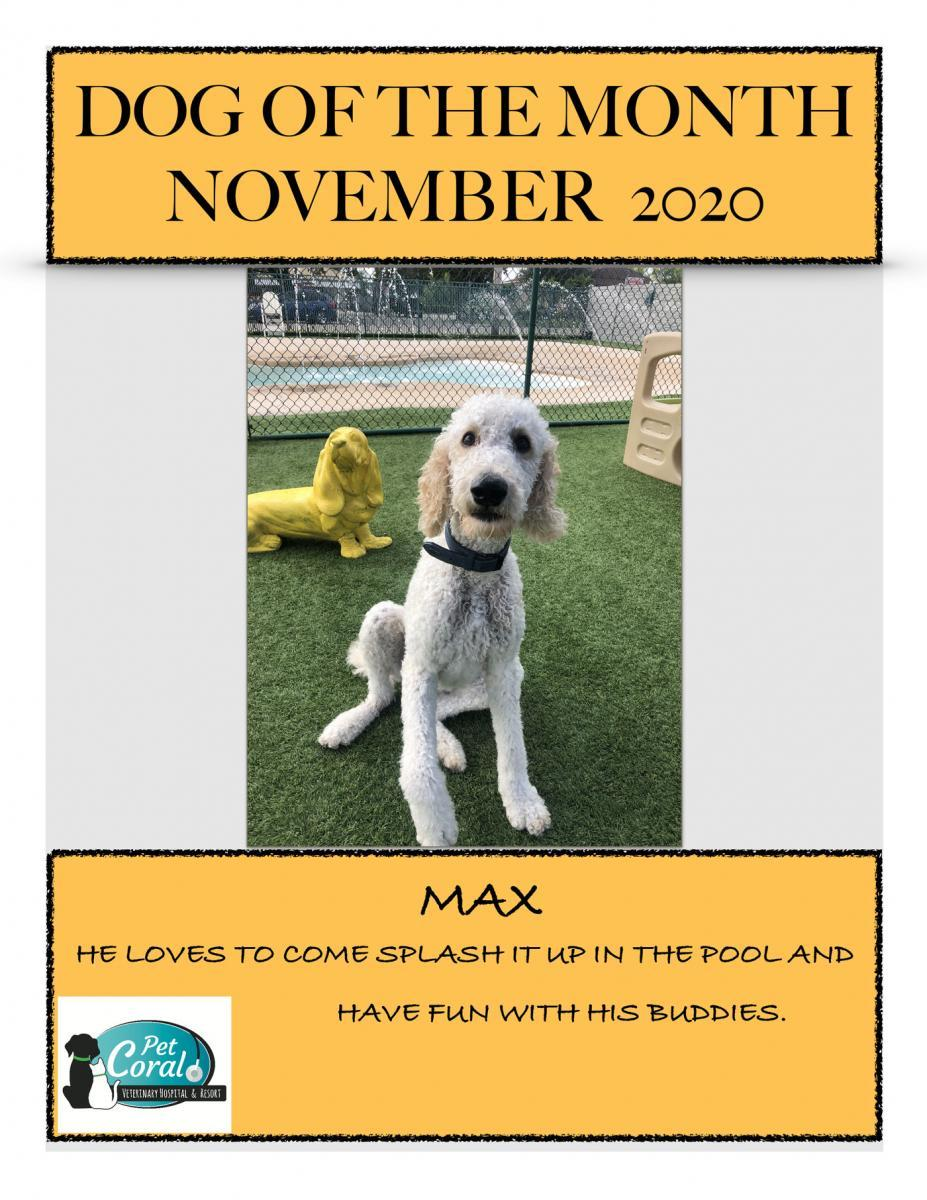 DOG OF THE MONTH NOVEMBER 2020