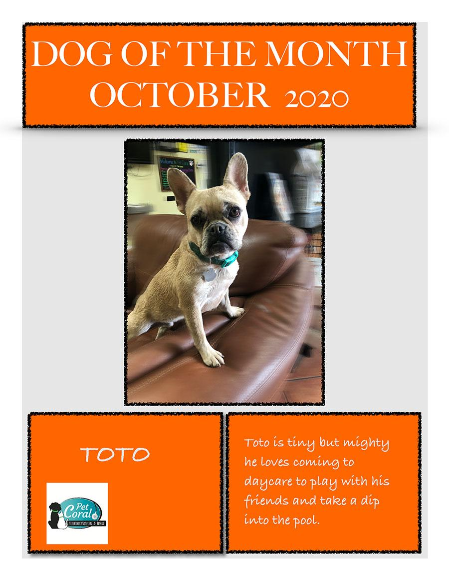 DOG OF THE MONTH OCTOBER 2020