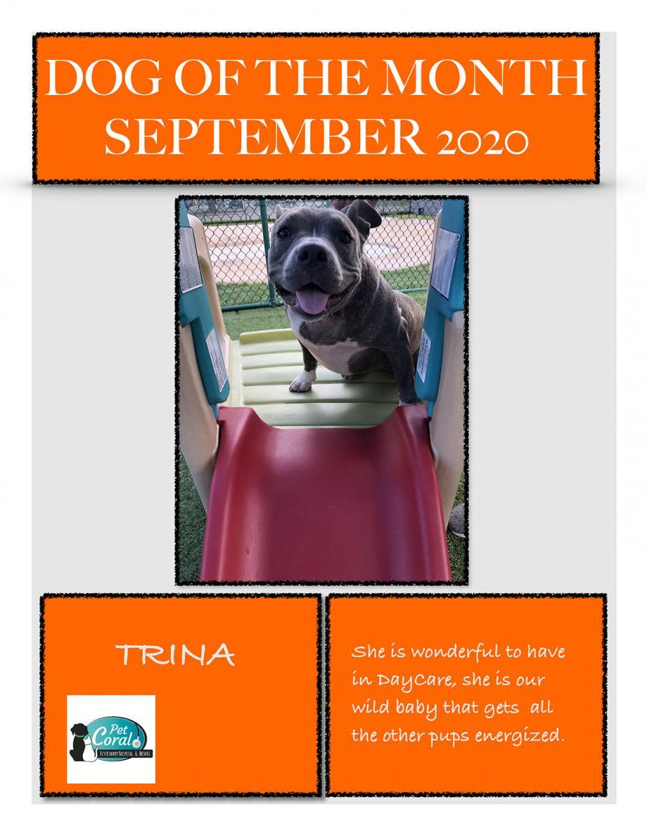 DOG OF THE MONTH SEPTEMBER 2020