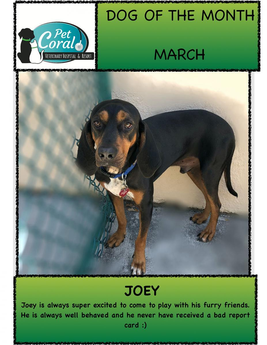 DOG OF THE MONTH MARCH 2021