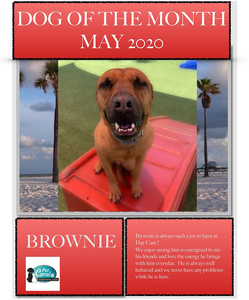 DOG OF THE MONTH MAY 2020