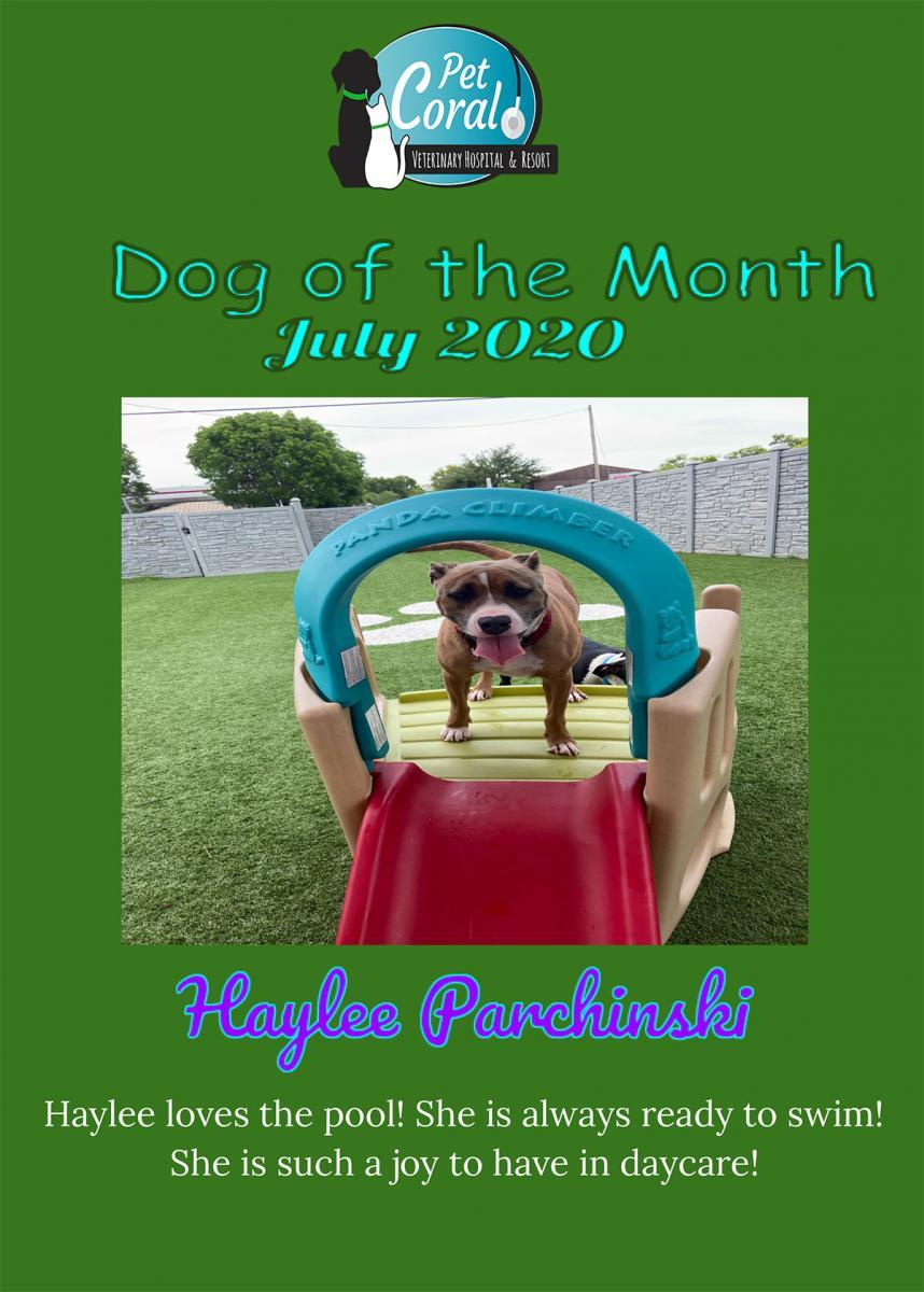 DOG OF THE MONTH JULY 2020