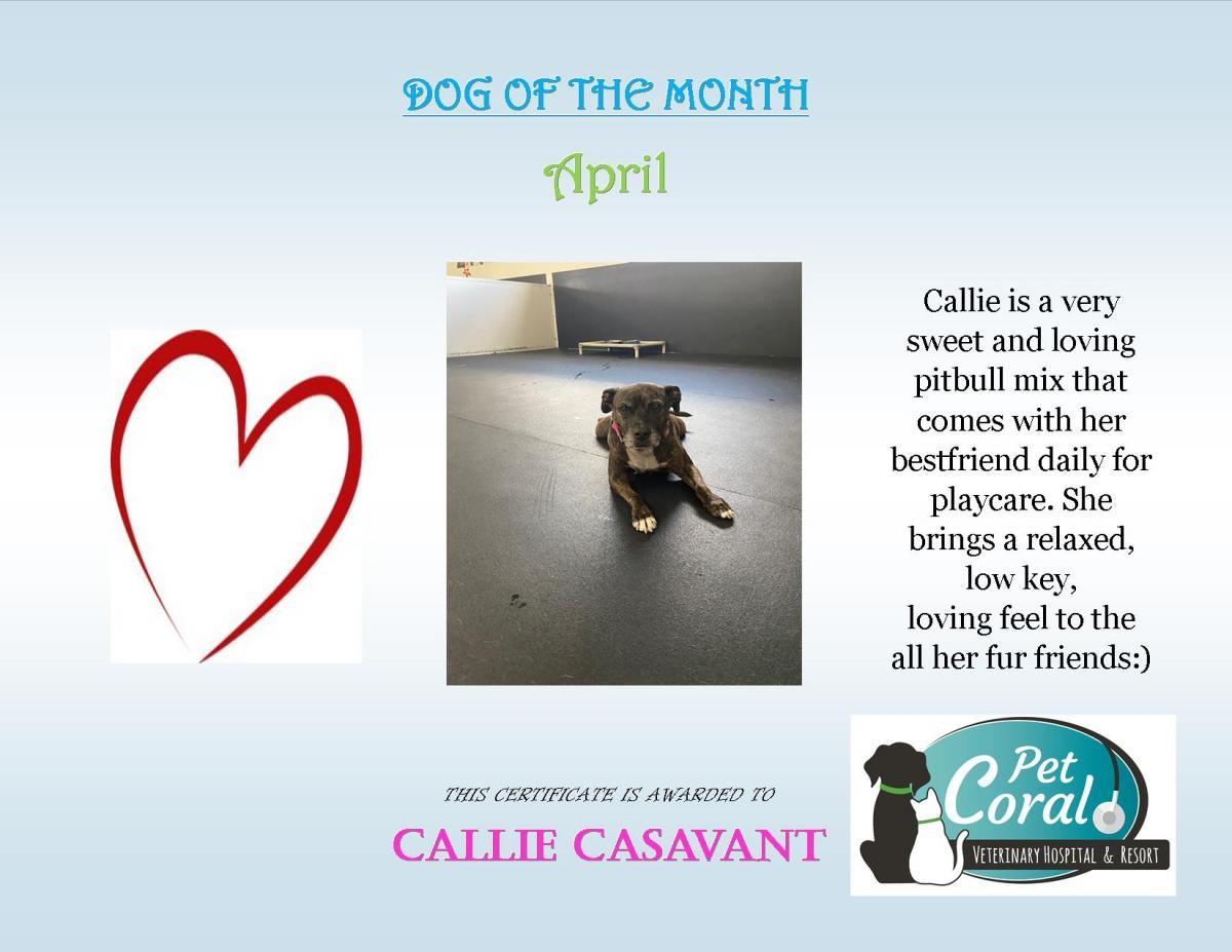 DOG OF THE MONTH APRIL 2020