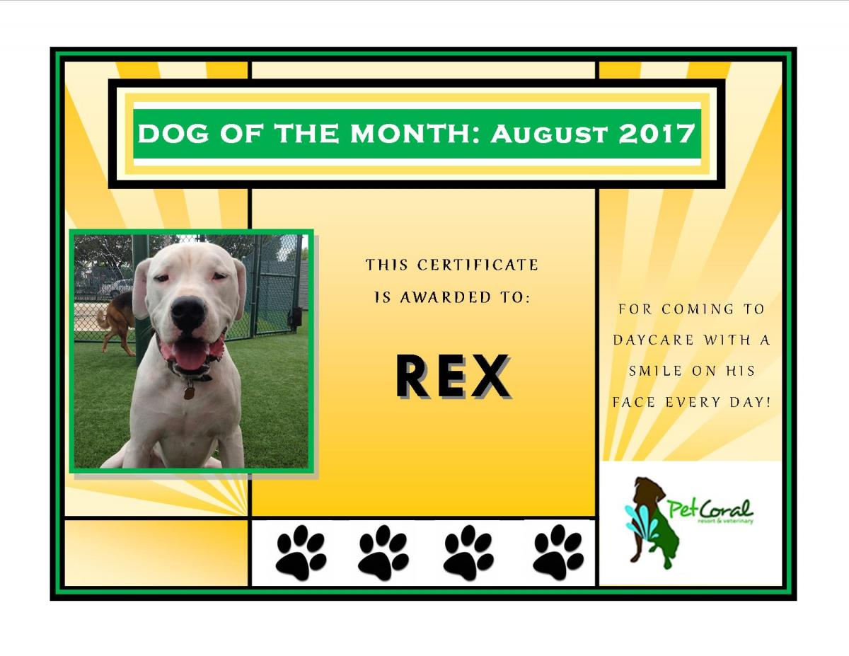 DOG OF THE MONTH-AUGUST 2017