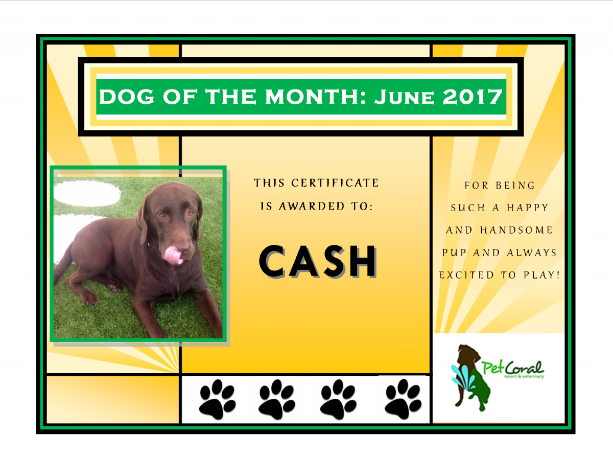 DOG OF THE MONTH-JUNE 2017 (CASH DUDLEY)