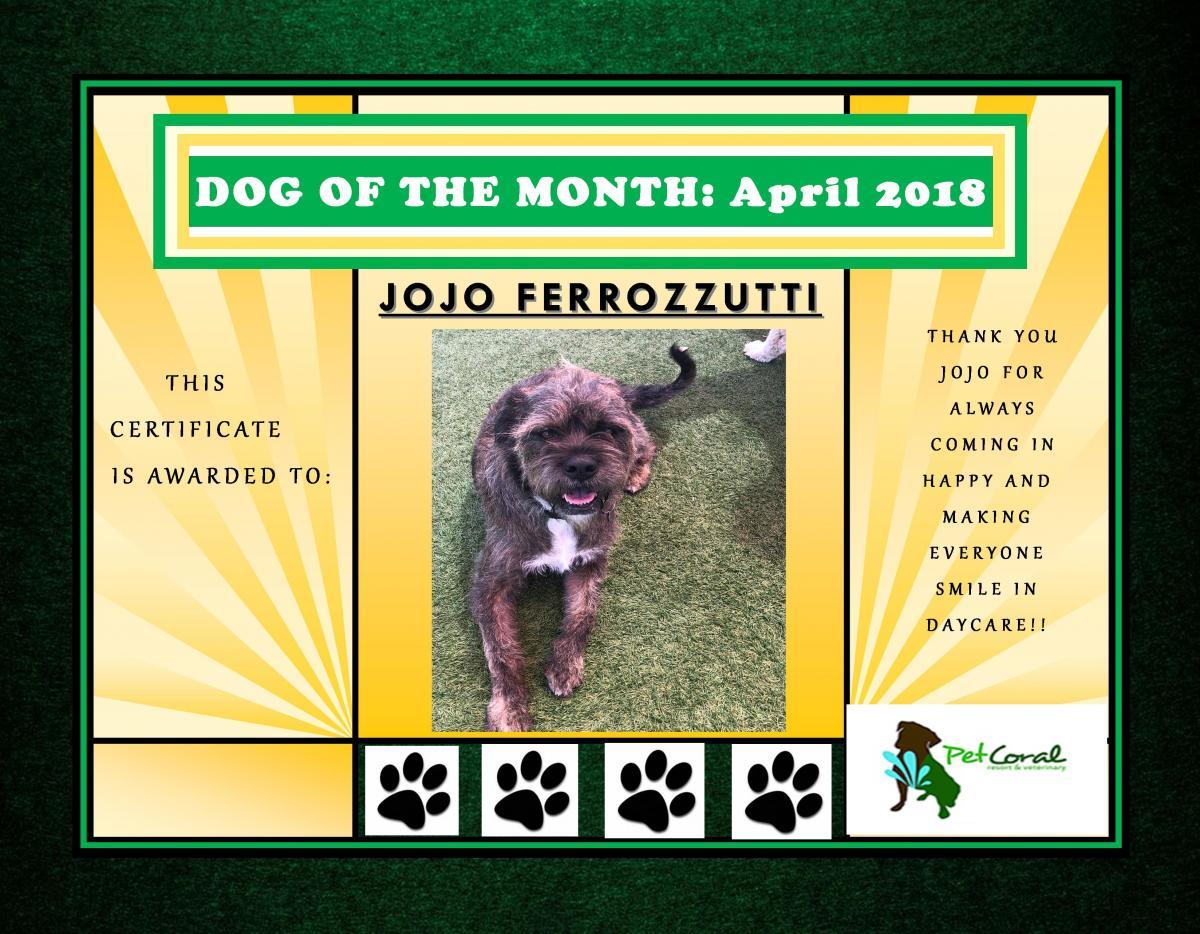 DOG OF THE MONTH- APRIL 2018 (JOJO)