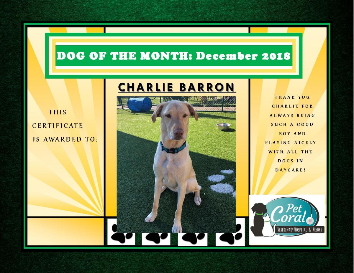DOG OF THE MONTH- DECEMBER 2018