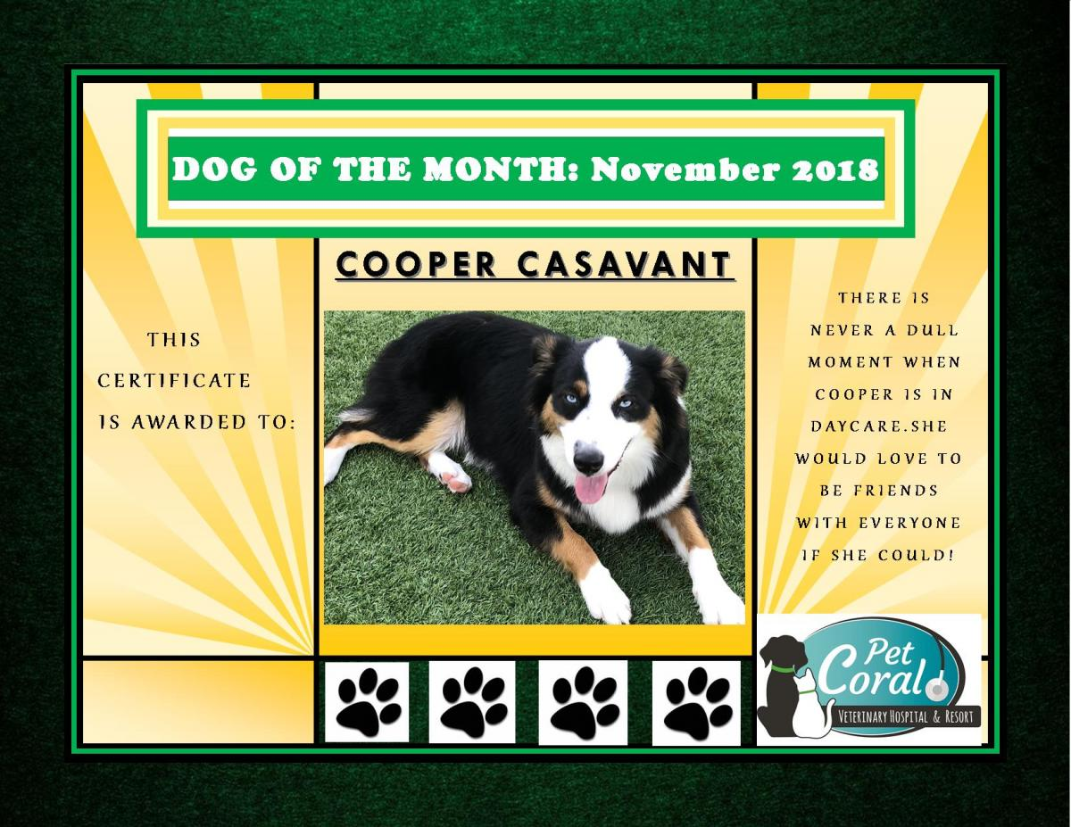DOG OF THE MONTH- NOVEMBER 2018